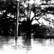 The Evangeline Oak during the 1927 flood