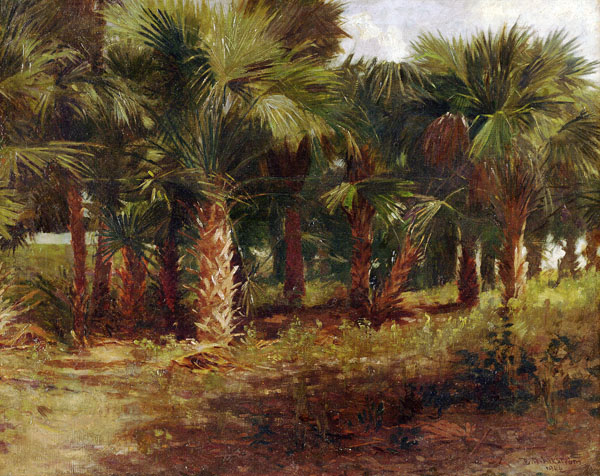 Palmettos in City Park, New Orleans