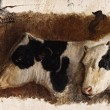 Study of Two Cows