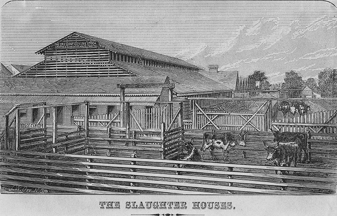 The Slaughter Houses