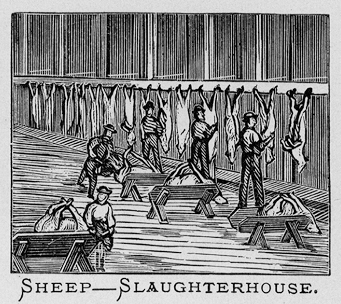 Sheep in the Slaughterhouse