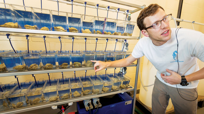 LSU doctoral candidate Brian Callam helps oysters spawn in the spawning rack. Photo by Rick Olivier